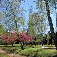 Нежное дыхание весны :: dli1953