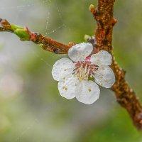 Весна .... :: Юрий Гординский