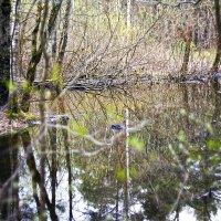 Паводок в лесу :: sorovey Sol