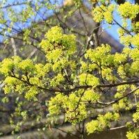 Весна! Весна! уж нет пути обратно!!! :: Ninell Nikitina