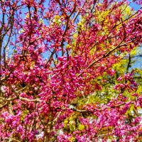 Весна буйствует :: Вячеслав Случившийся