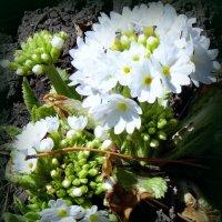Оттаяли цветочки . :: Мила Бовкун