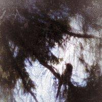 На дереве :: Елена Елена