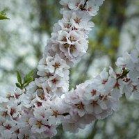 Весна в городе. :: Екатерина Рябинина