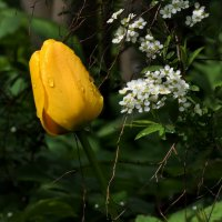 желтый и белый, это весна :: Heinz Thorns