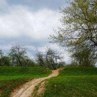 Извилистая тропа ... :: Лариса Корж