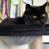 Однако, у котов тоже есть гнёзда! ) :: Тамара Бедай