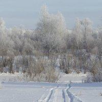 Зимы прекрасные моменты. :: сергей