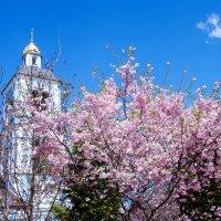 Цветущее обрамление колокольни ... :: Лариса Корж