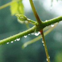 После дождя... :: ГЕНРИХ