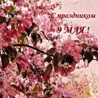 С праздником 9 Мая ! :: Лариса Корж
