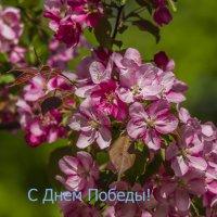 С Днем Победы! :: Петр Беляков