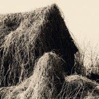 Покинутый домик :: Елена Минина