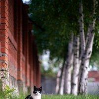 Cat :: Trage