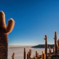 Остров Инкауаси... Боливия! :: Александр Вивчарик