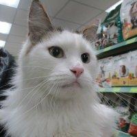 Кот,просто кот. :: Зинаида