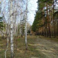 Смешанный лес . Май . :: Мила Бовкун