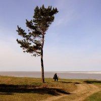 Два одиночества . :: Мила Бовкун