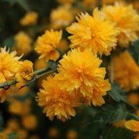 Весеннее золото :: Ольга
