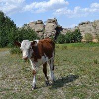 Аульчанин из Торайгыра... :: Андрей Хлопонин