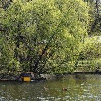 Москва. Воронцовский парк. Весна.. :: Наташа *****