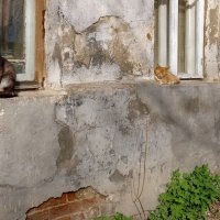 Три окна, три кота, майская зарисовка, в городе Тутаеве на ул.Ушакова :: Николай Белавин