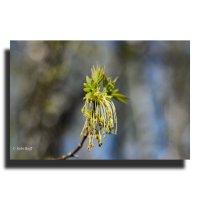 Весна... :: Андрей Кобриков
