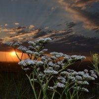Степная жизнь...На закате Солнца... :: Андрей Хлопонин