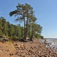 На Финском заливе :: Владимир Соколов