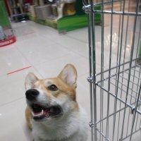 Собака-улыбака. :: Зинаида