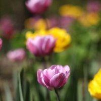 Весенние цветы :: Наташа С