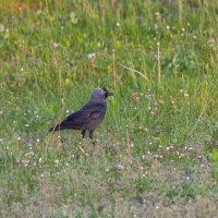 скромная птица :: vladimir