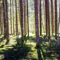 Прогноз - солнечно! :: Владимир Буравкин