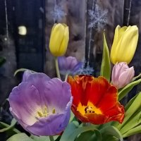 Тюльпаны :: ОКСАНА ЮРЬЕВНА ШВЕЦ