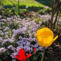 Весна! :: Марина Птичка