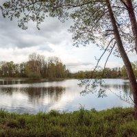 Три дерева на краю :: Николай Гирш