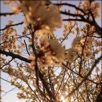 Утро..в саду..Жизнь прекрасна!!! :: Александр Шимохин