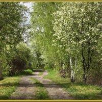 Май зеленый,май цветущий,вечно юный май! :: Нина Андронова