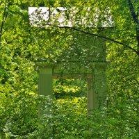 Волшебный свет майского дня.. :: Sergey Gordoff