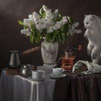 Букет белой сирени и утренний кофе... и любопытная кошка :: Алексей Кошелев