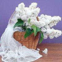 Словно невеста...вуаль нарядила..Из мая ,ты в вечность шагнув.... :: TAMARA КАДАНОВА