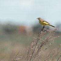 Птичка :: Оксана Лада