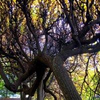 Деревья, видевшие многое... :: Сергей Карачин