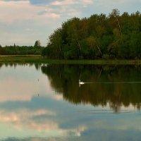 ...А  белый лебедь на пруду... :: Оксана Галлямова