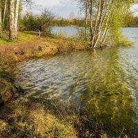 В хрустальной воде :: Николай Гирш