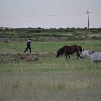 Бегун остановись,трава сейчас хороша. :: Андрей Хлопонин