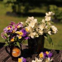 Цветные краски летнего утра.. :: Татьяна Ивановна