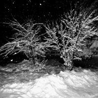 про зиму :: Елена Шаламова