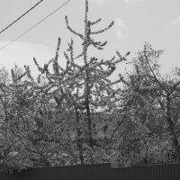 Весной всё цветёт :: Дмитрий Никитин
