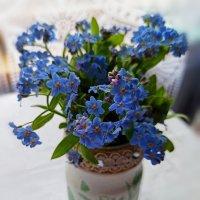 Нежность весны... :: Наталья Соколова